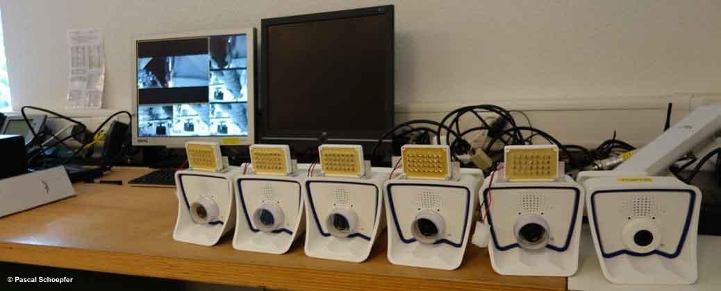 Webcams pour la volière par Pascal Schoepfer