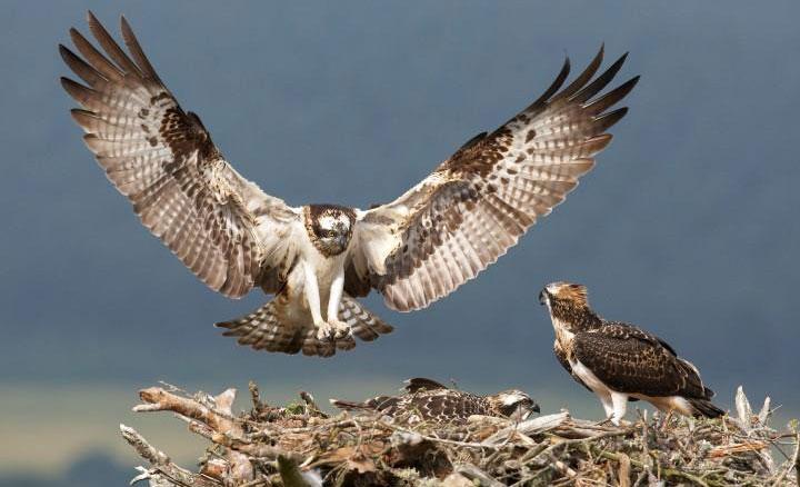 CoE Osprey report