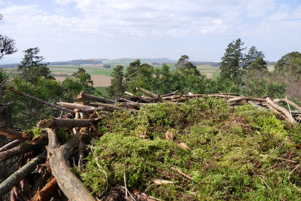 Panorama du nid
