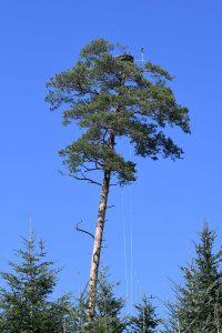 Osprey nest B2