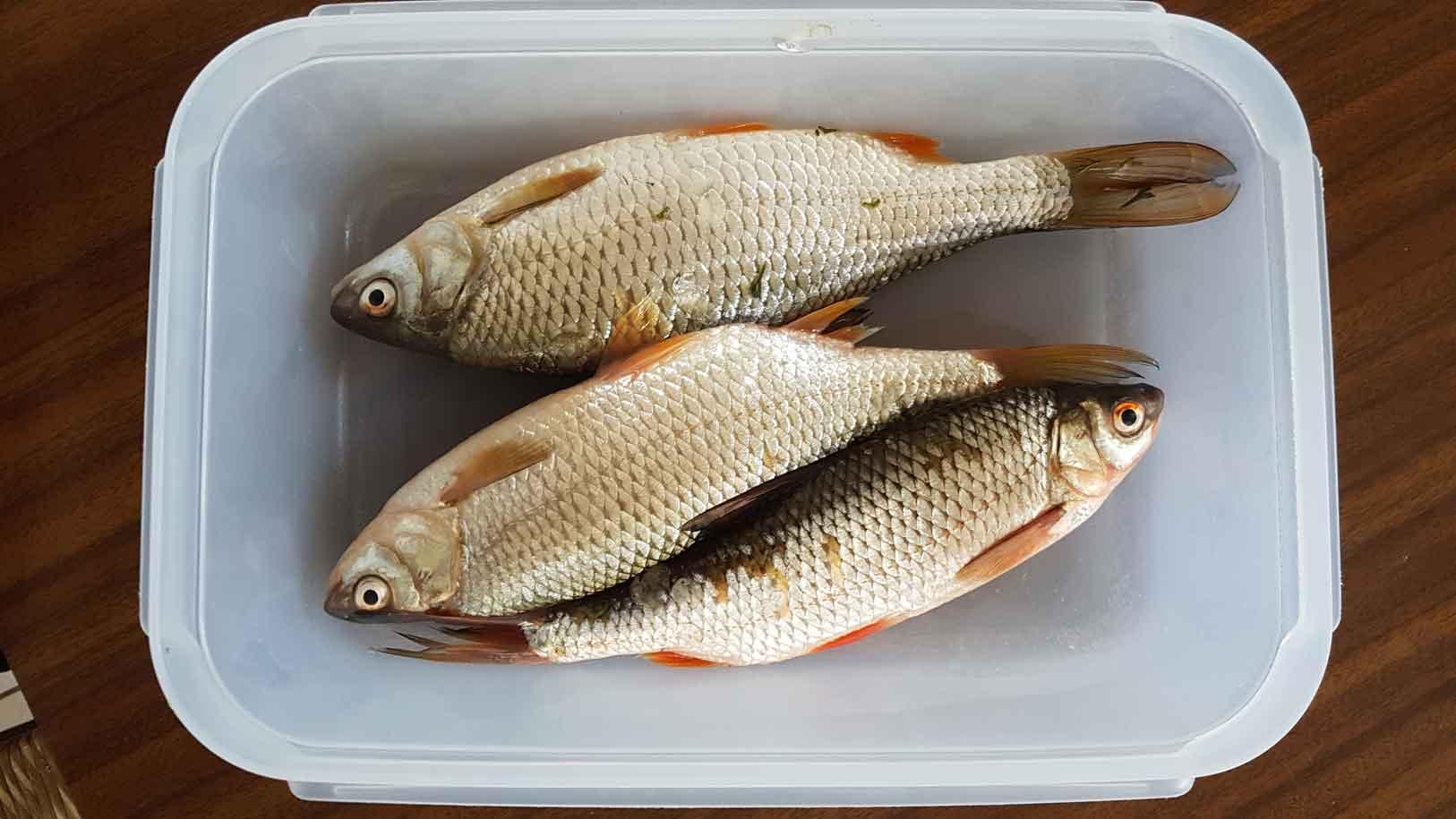 fish gardon